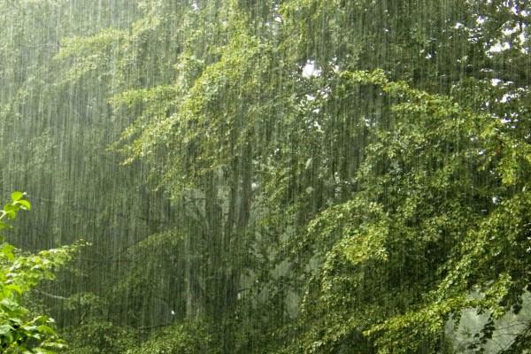 Погода в белое алтайский край алтайский район на неделю